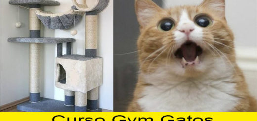 curso-gym-gatos